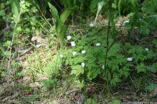 ahvenisto-plants-036_35018827382_o