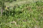 ahvenisto-plants-060_34797430690_o