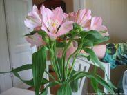 restaurant-krapihovi-flowers-008_35018195192_o