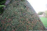 le-manoir-aux-quatsaisons-garden-014_24674353968_o