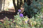le-manoir-aux-quatsaisons-garden-017_37659068705_o
