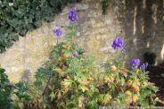 le-manoir-aux-quatsaisons-garden-018_37659067725_o