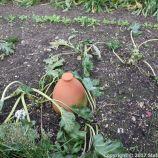 le-manoir-aux-quatsaisons-garden-019_26770869809_o