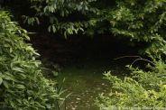 le-manoir-aux-quatsaisons-garden-028_26770837029_o