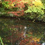 le-manoir-aux-quatsaisons-garden-029_38490456946_o