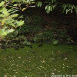 le-manoir-aux-quatsaisons-garden-030_38490454216_o