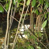 le-manoir-aux-quatsaisons-garden-036_37659104255_o