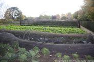 le-manoir-aux-quatsaisons-garden-039_38546742321_o