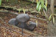 le-manoir-aux-quatsaisons-garden-045_26770922519_o