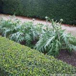 le-manoir-aux-quatsaisons-garden-053_24674392018_o