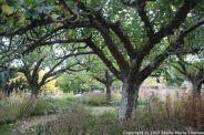 le-manoir-aux-quatsaisons-garden-055_24674384288_o