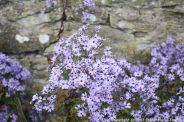 le-manoir-aux-quatsaisons-garden-058_24674369488_o