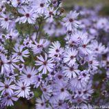 le-manoir-aux-quatsaisons-garden-059_24674367368_o