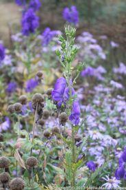 le-manoir-aux-quatsaisons-garden-060_24674365748_o