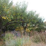 le-manoir-aux-quatsaisons-garden-062_24674361338_o