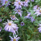 le-manoir-aux-quatsaisons-garden-063_24674359018_o