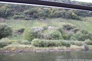 TRABEN-TRARBACH TO ZELL BOAT TRIP 014