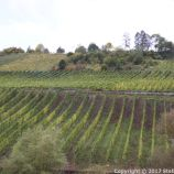 TRABEN-TRARBACH TO ZELL BOAT TRIP 029