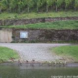 TRABEN-TRARBACH TO ZELL BOAT TRIP 046
