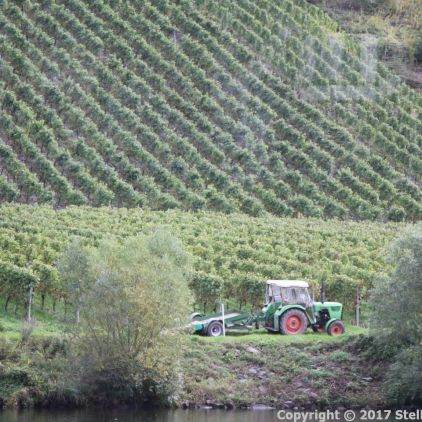 TRABEN-TRARBACH TO ZELL BOAT TRIP 047
