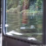 ZELL TO TRABEN-TRARBACH BOAT TRIP 033