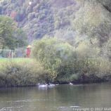 ZELL TO TRABEN-TRARBACH BOAT TRIP 041