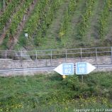ZELL TO TRABEN-TRARBACH BOAT TRIP 058