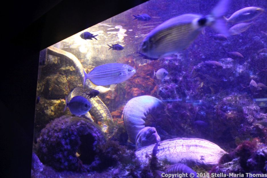OCEANOGRAPHIC MUSEUM, MONACO 023
