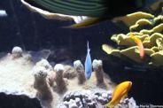OCEANOGRAPHIC MUSEUM, MONACO 053