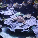 OCEANOGRAPHIC MUSEUM, MONACO 055