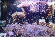 OCEANOGRAPHIC MUSEUM, MONACO 070