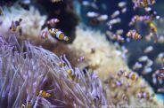 OCEANOGRAPHIC MUSEUM, MONACO 073
