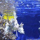 OCEANOGRAPHIC MUSEUM, MONACO 074