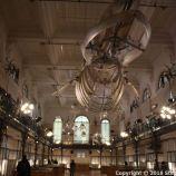 OCEANOGRAPHIC MUSEUM, MONACO 113