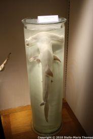 OCEANOGRAPHIC MUSEUM, MONACO 114