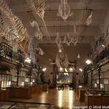 OCEANOGRAPHIC MUSEUM, MONACO 120