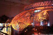 OCEANOGRAPHIC MUSEUM, MONACO 126