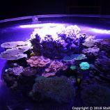 OCEANOGRAPHIC MUSEUM, MONACO 142