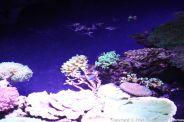 OCEANOGRAPHIC MUSEUM, MONACO 143
