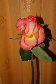 6th-gwa---dresden-hotel-suitess-015_3095731719_o