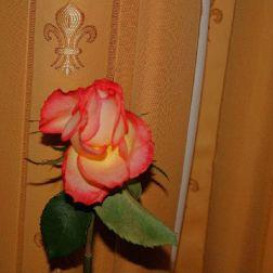 6th-gwa---dresden-hotel-suitess-016_3095732207_o