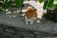aacher-hof-traben-trarbach-cat-004_3617429359_o