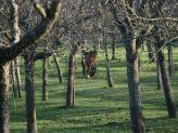 apple-orchard-001_391395437_o