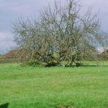 apple-tree-001_123585236_o