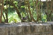 bird-001_3030574931_o