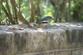 bird-003_3031414296_o