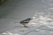 bird-004_3031414448_o