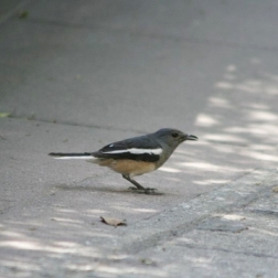 bird-005_3030575829_o