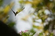butterfly-001_3030576001_o