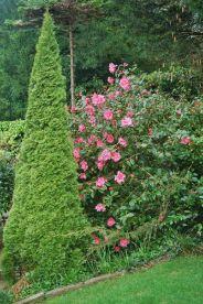 camellia-004_123583964_o